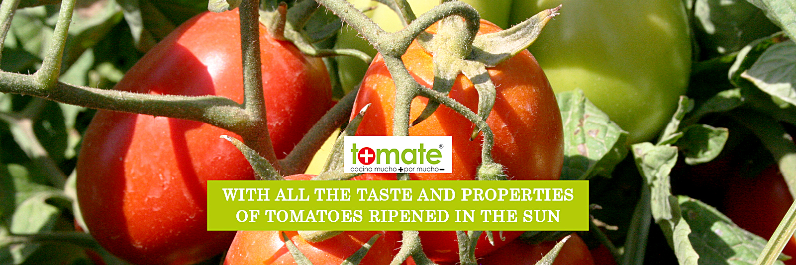 With all the taste and properties of tomatoes rippened in the sun